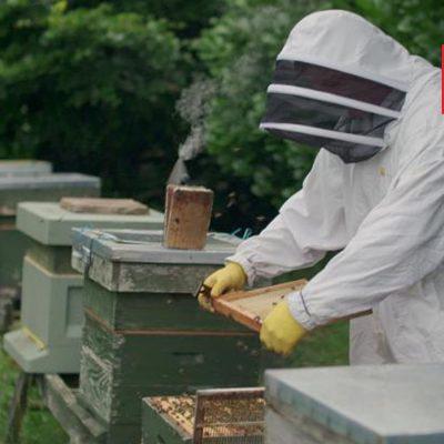 Imker Simon Lynch und seine Bienenstöcke.